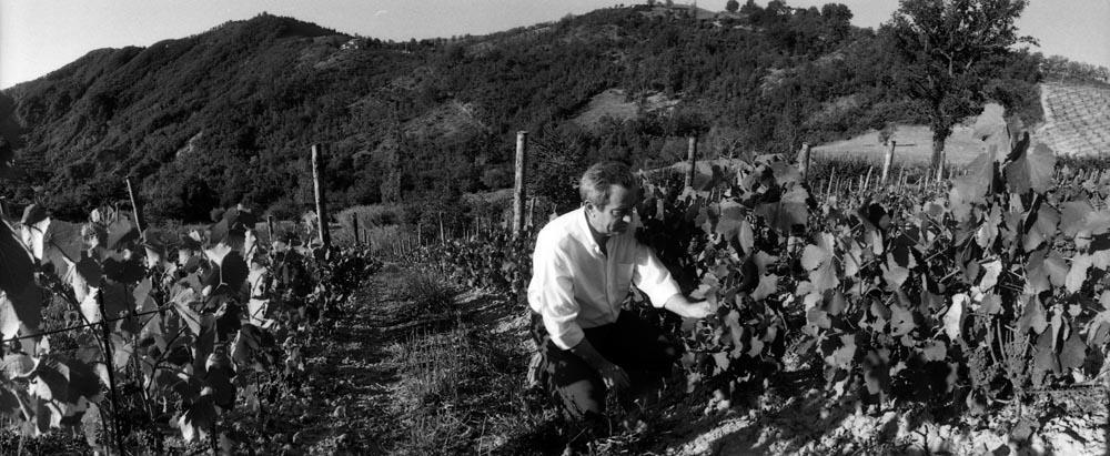 Vigne e Vendemmia Azienda Valturio